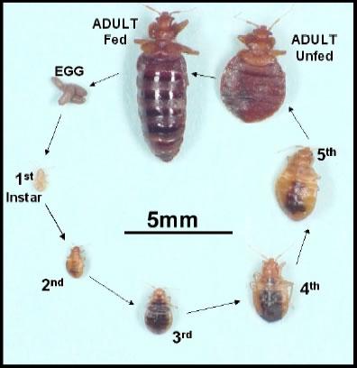 Ridder Pest Control LLC